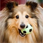 Dog with ball